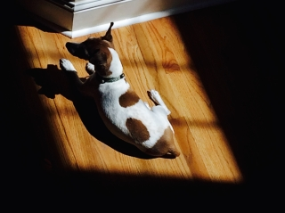 Lying in the sun is his thing.