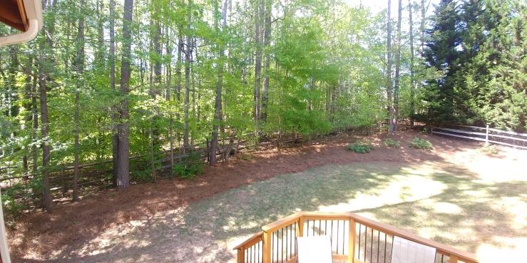 back-yard
